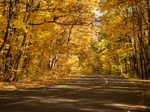 Asphalt road in autumn forest. Dense wood makes an arch of trees above the road. Trees with yellow leaves in October royalty free stock image