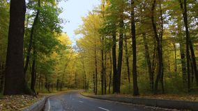 Asphalt road in the autumn forest, with yellow and green trees.  stock video