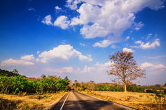 Asphalt road and birch tree under blue sky with clouds. Stock Photos