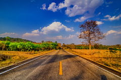 Asphalt road and birch tree under blue sky with clouds. Royalty Free Stock Photo