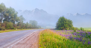 Asphalt road among the blooming alpine meadows in Caucasus mount Royalty Free Stock Photography