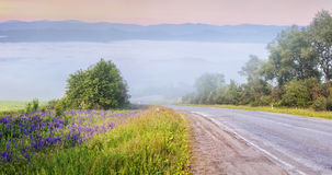 Asphalt road among blooming alpine meadows in foggy mountain Stock Photo
