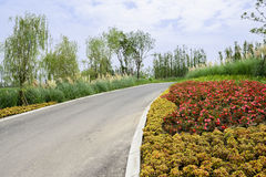 Asphalt road in colorful summer plants on cloudy day Stock Image