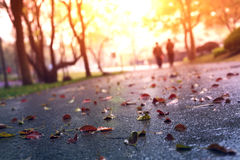 Asphalt road and deciduous Royalty Free Stock Photography