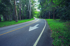 Asphalt road in deep forest use as landtransport in nature wild Stock Photo