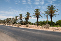 Asphalt road in the desert Royalty Free Stock Photo