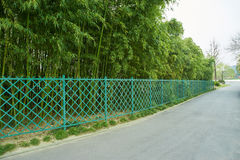 Asphalt road with fence and bamboo Stock Photos