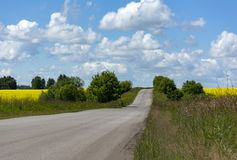 Asphalt road through a field with green grass and yellow flowers. Trees, blue sky with clouds, rural landscape Stock Photos