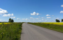 Asphalt road through a field with green grass and yellow flowers. Blue sky with clouds Stock Photography