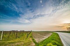 Asphalt road through fields Royalty Free Stock Photography