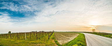 Asphalt road through fields Stock Image