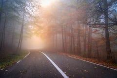 Asphalt road in a foggy autumn day stock photography