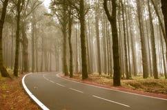 Asphalt road in foggy forest on Tenerife Stock Image