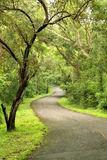 Asphalt road in the forest Stock Images