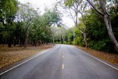 asphalt road in forest Stock Images