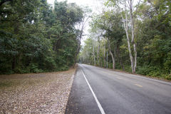 Asphalt road in forest Royalty Free Stock Photography