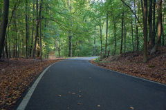 An asphalt road in the forest Stock Images