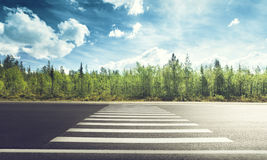 Asphalt road in forest Stock Image