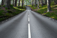 Asphalt road in forest landscape Stock Image