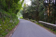 An asphalt road in the forest. Leading into the mountains near Kotor city, Montenegro Stock Photo