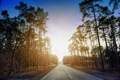 Asphalt road and forest Royalty Free Stock Images