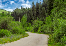 Asphalt road in the forest Royalty Free Stock Image