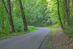 Asphalt road through the forest. The photo shows a narrow, asphalt, provincial, winding road. It leads through deciduous forest. It& x27;s summer. There are Stock Photo