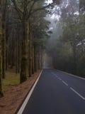 Asphalt road in forest Stock Image