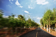 Asphalt road and forest Royalty Free Stock Image