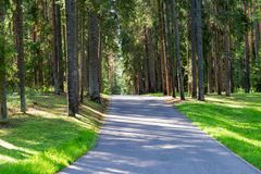 In the pine forest on a summer day. Asphalt road through the forest on a summer day royalty free stock images