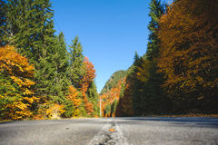 Asphalt Road at Forest Royalty Free Stock Images