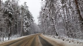 Asphalt road in the forest in winter Stock Image