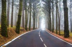 An asphalt road that goes through a misty dark misterious pine f Stock Photos