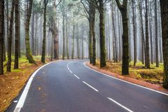 An asphalt road that goes through a misty dark misterious pine f Royalty Free Stock Photo