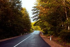 Asphalt road going into the distance in the autumn forest stock photos