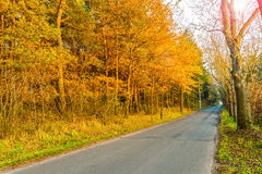 Asphalt road in golden autumn forest. Royalty Free Stock Image