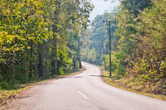 Asphalt road in green forest Royalty Free Stock Photo