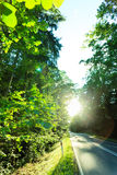 Asphalt road through the green forest Royalty Free Stock Photography