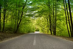 Asphalt road through the green forest in a sunny spring day royalty free stock images