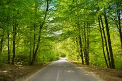 Asphalt road through the green forest in a sunny spring day royalty free stock photo