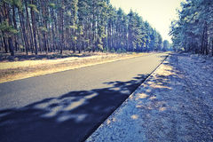 Asphalt road in the green forest Royalty Free Stock Photo