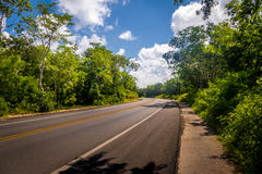 Asphalt road in green forest - Yucatan, Mexico Stock Images