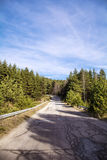 Asphalt road through the green pine forest  and clouds on blue sky Royalty Free Stock Photos