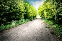Asphalt road among green trees Stock Photos