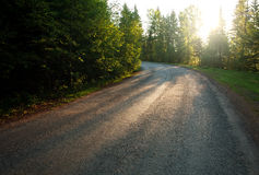 Asphalt road in green wild forest at dawn background Royalty Free Stock Image