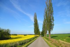 Fields in spring. Stock Photos