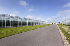 Asphalt road and greenhouses. In Westland in the Netherlands Royalty Free Stock Images