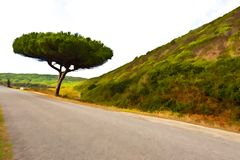 Asphalt Road. Between Hills Covered with Bush in Portugal, Stylized Photo Stock Images