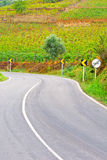 Asphalt Road. Between Hills Covered with Vineyard in Portugal Stock Image