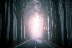 Free Asphalt Road In Foggy Forest On Tenerife Stock Photos - 122401113